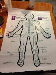 9 best grade 5 6 human body images on pinterest teaching science