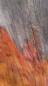 Laminate Flooring Outdoors Free Images Tree Nature Rock Texture Floor Trunk Bark