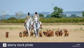 hound hunts stock photos u0026 hound hunts stock images alamy