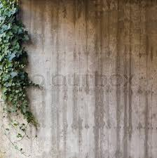 green ivy on grey concrete textured wall background stock photo