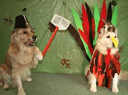 no sew turkey costume for dogs