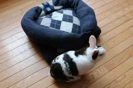 Rabbit Beds Diy Sweater Pet Bed Empress Of Dirt