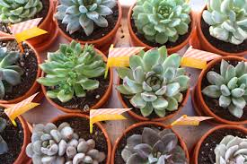 thank you favors enjoy it by elise blaha cripe potted succulent thank you favors