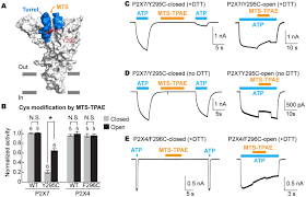 Lax Gate Map Figures And Data In Structural Basis For Subtype Specific