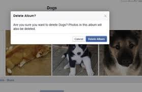 dog photo album how to view someone s albums chron