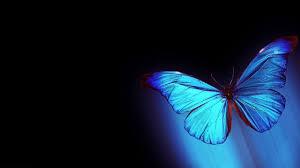 hologram 3d butterfly 4k 2017