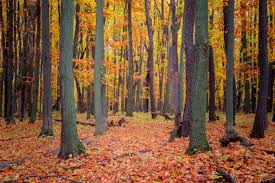 shows fall foliage michigan