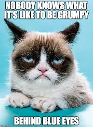 Grumpy Cat Meme Generator - grumpy cat meme generator imgflip