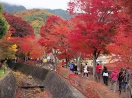 30 photos mt fuji u0026 lake kawaguchi autumn color festival