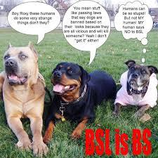 Terrible Baby Names Dear Peta Dogs Respond To Peta Joining Terrible Anti Pit Bull