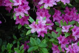 types of purple ideas types of bushes design ideas in pretty purple flower ideas