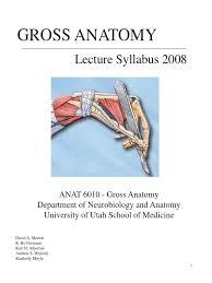 Gross Anatomy Of The Brain And Cranial Nerves Pdf Gross Anatomy Pdf Spinal Cord Vertebral Column