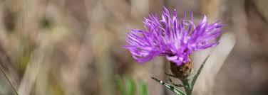 programs natural resources weeds and 10 ways to celebrate oregon invasive weed awareness week