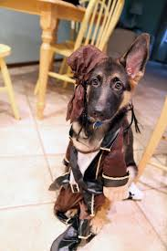 Dog Costumes Halloween 55 Howl Ween Costumes Images Animals Pet