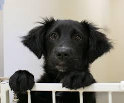 adoption information adopt a pet from panhandle animal shelter