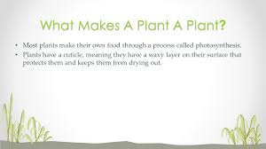 Trees And Their Meanings By Ethan Duncanplants Plants Are Living Organisms That Cover
