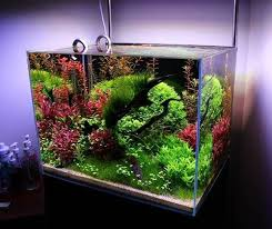 Most Beautiful Aquascapes Beautiful Planted Aquascape By Dantrasy Freshwater Aquarium