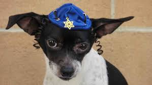 hanukkah hat hanukkah hat for dog or cat