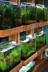 Aquascaping Shop Aquarium Zen
