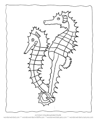 free seahorse coloring sheet collection seahorse pictures