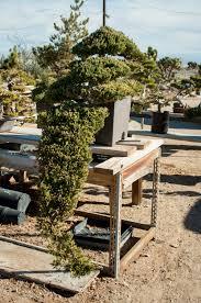 kim u0027s bonsai nursery