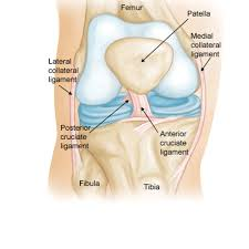 Anterior Fibular Ligament Ligament Tear Acl Mcl Archives A Nation In Motion
