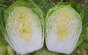 cabbage china toxic cabbage another food in china china daily mail