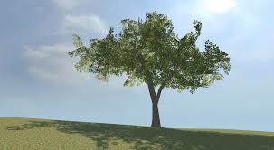 tree looking for tips virginia green ash tree polycount
