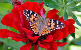 www flowers butterfly and flower wallpaper