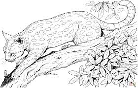 leopard cat on a branch coloring page free printable coloring pages