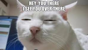 Hey You There Meme - image tagged in i see what you did there cat imgflip