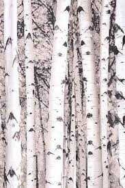Tree Curtain Winter Birch Trees And Cardinals Shower Curtain Print On Demand