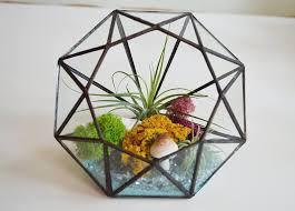 air plant diamond garden terrarium