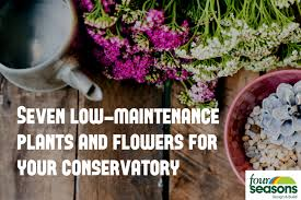 seven low maintenance plants and flowers for your conservatory