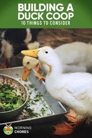 best backyard chickens best 25 raising ducks ideas on pinterest duck coop keeping