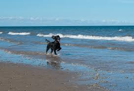 5 completely dog friendly beaches in norfolk sykes cottages