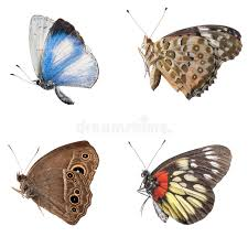 butterfly side view collection stock photo image of side