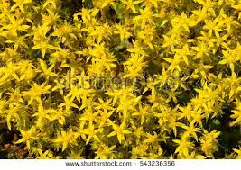 moss shoots stock images royalty free images vectors
