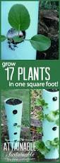 20 vertical vegetable garden ideas vertical vegetable gardens