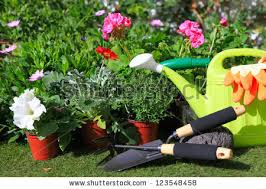 planting flowers garden tools various flowers stock photo