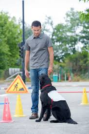 Animal Trainers Salary Your Guide To Finding Dog Trainers In Nashville Tn Video