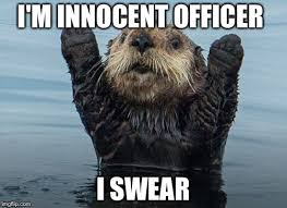 Sea Otter Meme - hands up otter memes imgflip