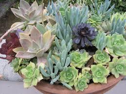 resume modernos terrarios suculentas ideas para combinar tus suculentas de la mejor forma suculentas