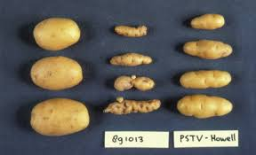 Viroid Diseases In Plants - what are viroids socratic