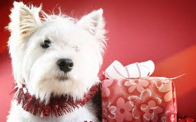 sweet christmas gifts wallpapers dog animal dog puppy gift pet cute christmas background desktop