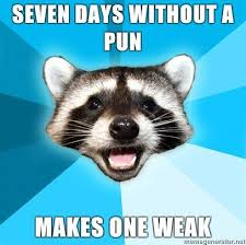 Raccoon Excellent Meme - lame pun coon know your meme