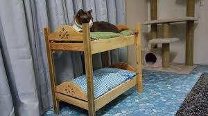 Cat Bunk Bed Cat Bunk Beds White Bed