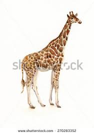 giraffe sketch stock illustration 271120448 shutterstock