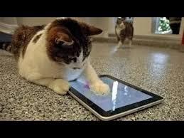 imagenes chistosas youtube videos graciosos 2014 videos de risa de gatos chistosos jugando