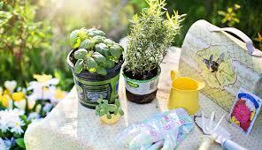 florida vegetable gardening tips for beginners